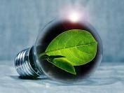 Illustration: grünes Blatt in einer Glühbirne